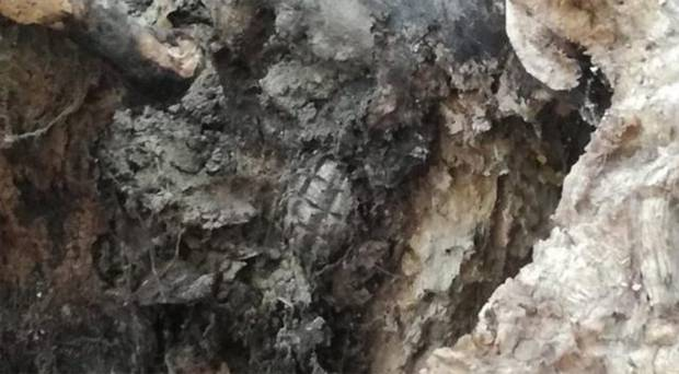 tree-stump-grenade